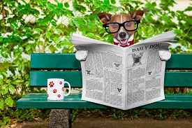 jack_russell_dog_reading_newspaper_magazine_sitting_bank_park_cg9p8007275c_th
